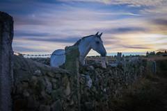 Atardecer en Aldea del Obispo. (ciresportu) Tags: 1585 70d canon horse spain espaa castillaylen salamanca atardecer caballo aldeadelobispo