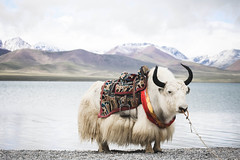 IMG_1104 (chungkwan) Tags: namco tibet religion buddha travel nature world life canon sigma
