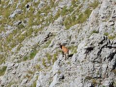 gran-sasso-monte-corvo-35 (Antonio Palermi) Tags: gransasso montecorvo escursionismo