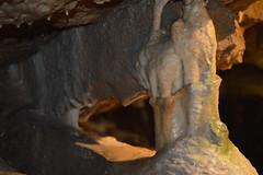 One of the Smaller Columns (CoasterMadMatt) Tags: stumpcrosscaverns2016 stumpcrosscaverns stump cross caverns cave caves showcave showcaves englishshowcaves undergroundlandscape naturallandscape landscape landscapes underground geology caveformation limestoneformation limestone speleothem speleothems column columns stalagmite stalactite stalagmites stalactites yorkshiredales yorkshiredalesnationalpark yorks yorkshire dales national park northeastengland england britain greatbritain gb unitedkingdom uk summer2016 august2016 summer august 2016 coastermadmattphotography coastermadmatt photos photography nikond3200