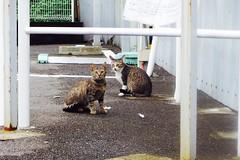 Today's Cat@2016-09-21 (masatsu) Tags: cat thebiggestgroupwithonlycats catspotting pentax mx1