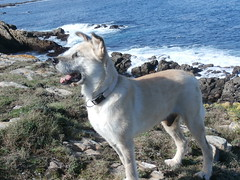 toto e mar (jesust793) Tags: perro mascota toto dog pet mar nature