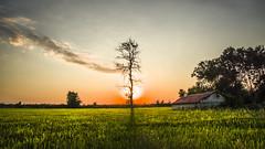 two old friends (drstar.) Tags: sunlight sunset nikond610 flickr flickrturkey