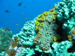 (JustinField-Greens) Tags: marinepark lordhoweisland ballspyramid mtgower
