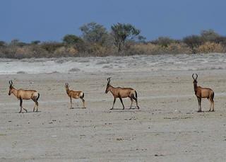 Botswana Hunting Safari 35