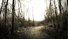 Uncertain future (bumbazzo) Tags: wood bridge winter bw italy white black milan landscape landscapes woods italia milano bridges bn ponte future inverno paesaggi bianco nero paesaggio uncertain futuro bosco ponti boschi boscoincitt incerto