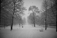I made a snowcreature 5 (ShinzonTme) Tags: winter snow firstsnow blizzard tampere