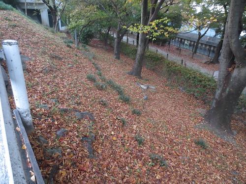 落ち葉の秋