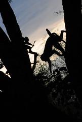 DSC_0125 (stephanelhote) Tags: portraits enfants paysages etosha okavango flore fleuve afrique faune namibie zambie himbas zambèze