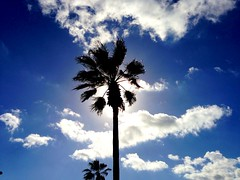 Tropical photo taken in the parking lot at Lowes (jakenzfixnit4u) Tags: sky clouds palmtrees tropical iphone5