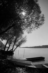 rnyk (.e.e.e.) Tags: tree river boats boat hungary duna danube tmy donau kodaktmax100 dunav orangefilter olympusom2n zuiko2824 kodakxtoldeveloper rsekcsand bcskiskunmegye epsonv350photoscanner