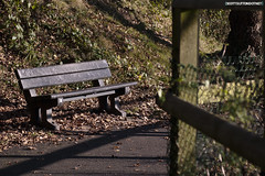 A bench on the Caerleon cycle path