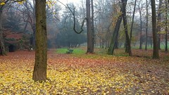 park autumn trees colors photography amazing samsung... (Photo: francesco (omino del vento)2 on Flickr)