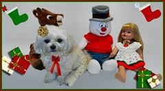 Still Waiting For Santa (marilyntunaitis) Tags: christmas pets dogs alex reindeer snowman stuffedanimals bella rudolph madamealexanderdoll the365toyproject 2014photoadaychallenge 2014ayearinpictures
