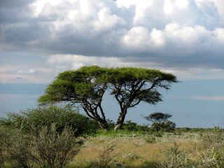 Botswana Hunting Safari 22