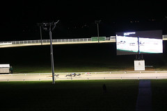 AB4T7882.JPG (TowcesterNews) Tags: england history sports bar night lights northamptonshire racing crowds northants realale greyhounds greyhoundracing gbr firstmeeting towcester towcesterracecourse