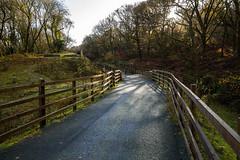 Cycle Path to Horrabridge (trevorhicks) Tags: autumn trees canon shadows path sigma devon cycle tavistock grenofen 700d