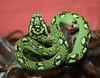Trimeresurus trigonocephalus (colindaca) Tags: verde snake venomous serpente velenoso trimeresurustrigonocephalus