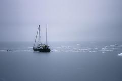 IMG_8634 (gaujourfrancoise) Tags: travel blue fog alaska grey gris unitedstates foggy bleu brouillard princewilliamsound etatsunis princewilliamssound