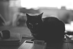 51/52 Playing games (Lobe occipital) Tags: animal cat blackcat 50mm c games chatnoir