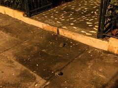 """Granada: les crapauds sont de sortie la nuit au Nicaragua. Attention, où vous mettez les pieds ! ;) <a style=""""margin-left:10px; font-size:0.8em;"""" href=""""http://www.flickr.com/photos/127723101@N04/26180596723/"""" target=""""_blank"""">@flickr</a>"""