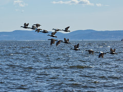 """Formation (Vidar """"the Viking"""" Ringstad, Norway) Tags: sea sky sun mist cold nature water sunshine birds oslo norway norge flying spring ship action horizon hill norwegen ducks formation fjord intheair bygdy waterscape natureshot bluehaze bergand naturepic canoneos5dmkiii"""