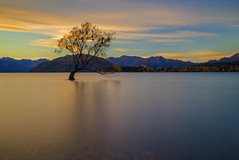#ThatWanakaTree (Arief Rasa) Tags: longexposure sunset newzealand cloud lake tree landscape outdoor calm lakeside willow nz otago serene submerged lakeview aotearoa wanaka lakewanaka sunsetsunrise wanakatree thatwanakatree