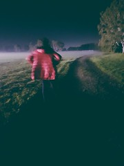 Night Fog - Galaxy S7 (Jonno Cass) Tags: sunset plants green beach wet rain june garden moss flickr chelsea phone samsung australia victoria galaxy s7 gully ferntree fliter