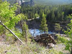 BanffNatlPk161 (alicia.garbelman) Tags: canada waterfalls alberta rockymountains bowriver bowfalls banffnationalpark