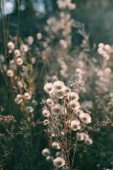2015-09-29 09.58.51 1 (anastasiya_klenyaeva) Tags: sky nature yellow russia autmn     saratov vsco vscocam vscorussia vscosaratov