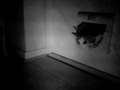 20160523-014712-i-1 (Catflap central) Tags: cat catdoor katzenklappe raspberry pi camera cats catflap kattenluik catflapj2nnl pet meow