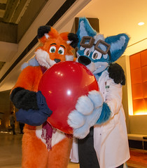 _DSC4253 (Acrufox) Tags: midwest furfest 2015 furry convention december hyatt regency ohare rosemont chicago illinois acrufox fursuit fursuiting mff2015