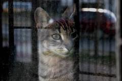 Lights (ojibwaarts) Tags: light portrait pet cats pets window glass cat reflex gato claws softlight cateye canont3i