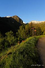 16-palu3 (Davide Podetti) Tags: parco val di dello pian peio stelvio pal valdisole