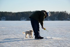 Ice fishing II (Essi J.) Tags: winter people dog lake ice fishing