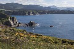 _MG_8940 (xabelmesa) Tags: cliff costa asturias busto asturies acantilados
