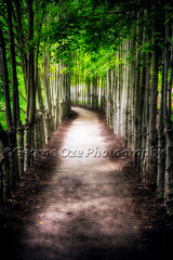 Path To My Destination (George Oze) Tags: park usa inspiration vertical forest garden landscape outdoors hope us newjersey outdoor path unitedstatesofamerica hamilton perspective scenic nobody direction trail destiny northamerica destination dreamy serene inspirational spiritual footpath tunnelvision fineartphotography treetunnel dirtpath diminishingperspective intheforest leadingpath treesrowoftrees
