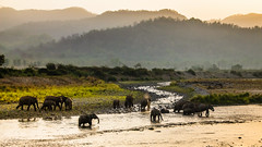 Elephant herd (Said Photography) Tags: jimcorbett nationalpark asiaticelephants elephant herd