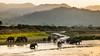 Elephant herd (Said Photography) Tags: jimcorbett nationalpark asiaticelephants elephant herd