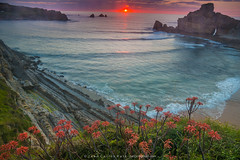 Aloe sunset (Juan C Ruiz) Tags: sunset costa sun aloe spain vera cantabria quebrada cantabrico liencres cantabric portio