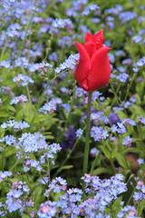 IMG_4451 (Irina Souiki) Tags: parcdesceaux france paris sceaux flowers nature parc park
