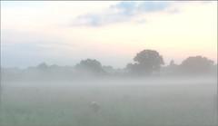 Dog in Fog (jo92photos) Tags: morning mist field fog dawn countryside moody phone atmospheric