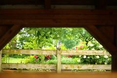 IMG_3760 (joyannmadd) Tags: amish horses intercourse pennsylvania kitchenkettlevillage farm animals lancaster coumty pa farms nature outdoors