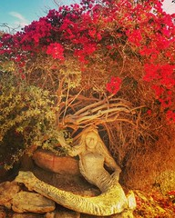Camera phone (149) (Polis Poliviou) Tags: life abstract nature mobile photography mediterranean phone photoshoot image picture cyprus pic images lg capture cipro mobilepictures phonepicture polis zypern nicosia kypros chypre takenwithphone chipre kypr bymobile cypr cypern  kipras mobileimages ciprus republicofcyprus    poliviou polispoliviou   cyprusinyourheart    sayprus chipir wwwpolispolivioucom yearroundisland cyprustheallyearroundisland polispoliviou2015 polispoliviou2016
