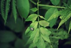 coiled (taralees) Tags: summer caterpillar floraandfauna mainewoods picmonkey