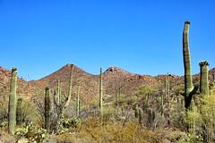 Arizona (ClarkT1957) Tags: saguaronationalpark arizona
