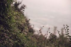 la montessa maddalena (andreabotti567) Tags: canon5d meyer primotar 135mm f 35
