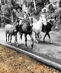 H cavalos no meio do caminho. (Expulso de Parasos) Tags: cavalos estrada cavalo