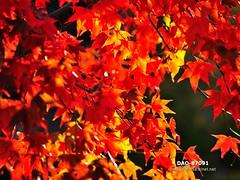 DAO-87091 (Chen Liang Dao  hyperphoto) Tags:   taiwan
