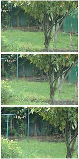 la bête du jardin